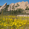 "<span id=""date"">_04/10/11_</span> <span id=""title"">Vasquez Goldfields</span> The dramatic backdrop behind this pretty little patch of goldfields (<em>Lasthenia californica</em>) is part of Vasquez Rocks. It's a <a href=""http://parks.lacounty.gov/Parkinfo.asp?URL=cms1_033383.asp"">small park</a> with otherworldly rock formations off the 14 freeway near Agua Dulce - between Palmdale and Santa Clarita. We came here as part 2 of a day trip. Part 1 was to the <a href=""http://www.parks.ca.gov/default.asp?page_id=627"">Antelope Valley Poppy Reserve</a>, but the poppies were barely there. We'll definitely have to go back during a better year - apparently they're pretty unpredictable, because we had plenty of rain this winter. Want to see more? My <a href=""http://www.jawsnap.net/Misc/Poppies-and-Rocks/16559110_FRDV2"">Poppies and Rocks</a> gallery includes a skull, weird flash effects and a 6-shot panorama. Check it out, yo.  <a href=""http://www.jawsnap.net/Daily/year3/11272102_ACXDJ#833936366_b5W5Y"">[last year]</a> <em>Sea World!...</em>"