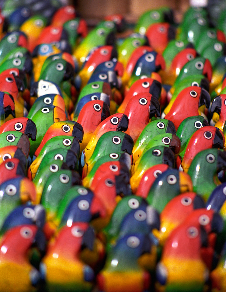 Colourful Balsa-wood Parrots, Ecuador