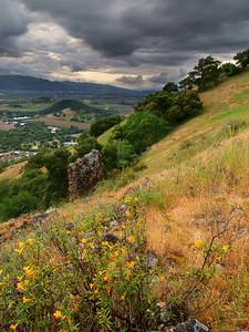 Wildflowers - Rector Ridge overlooking Napa Valley