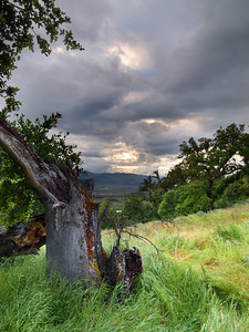 The Veteran of Foreign Storms - Rector Ridge overlooking Napa Valley