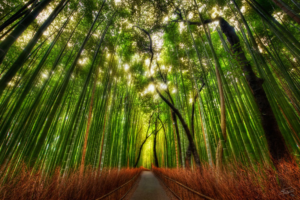 """05 - Trey Ratcliff - """"the mist from the tree tops fell on me from above and behind"""""""
