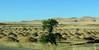 Desert heading south
