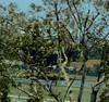 Goodyear blimp through the trees