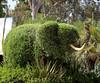 Life size elephant topiary