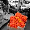 Blossoms at Farmer's Market