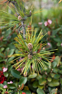 "Assignment: ""Make use of different apertures to emphasize the main subject"""