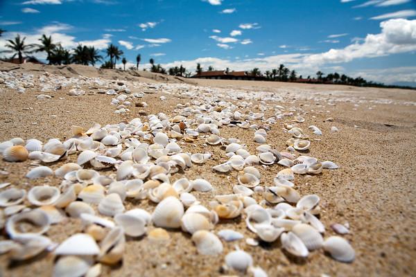 Shells Vietnam