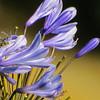 Flowers - long lens