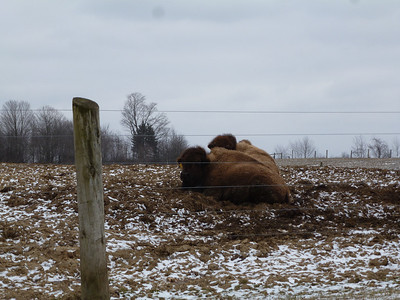 Went to http://www.redrunbison.com/home.html to pick up  fresh ground Bison.