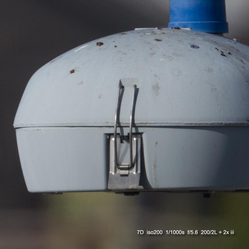 IMAGE: http://julianchen.smugmug.com/Misc/Test-Photos/i-tG22xnv/0/X3/20121207-Canon%20EOS%207D-7D1_3808_cropped-X3.jpg