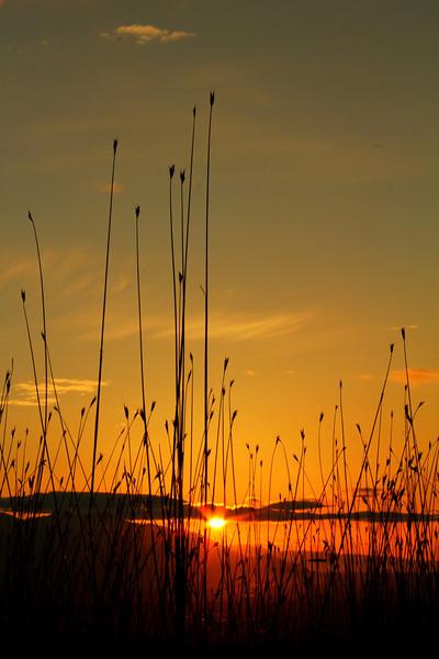 ~ Last Light of Evening ~