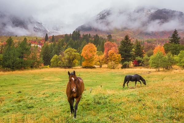Stroll in Fall