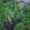 weeding-5