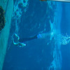 20150228 Weeki Wachee Springs 0010