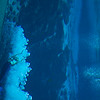 20150228 Weeki Wachee Springs 0011