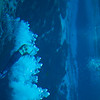 20150228 Weeki Wachee Springs 0012