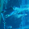20150228 Weeki Wachee Springs 0018
