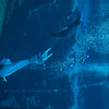 20150228 Weeki Wachee Springs 0017
