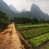 """<h2>Gardens in the Mist</h2> <br/>The Li River valley is a beautiful and serene area of southern China that's green, alive, and mysterious.  The verdant limestone cliffs cover the landscape and give everything an ethereal feel.<br/><br/>After a trip down the river, I got off the boat and decided to hike back to the little village where I was staying.  Along the way, I decided to hike down a side-road that went off into these little family-run farms.  I set up for a shot on this quiet dirt road.<br/><br/>- Trey Ratcliff<br/><br/><a href=""""http://www.stuckincustoms.com/2011/01/13/gardens-in-the-mist/"""" rel=""""nofollow"""">Click here to read the rest of this post at the Stuck in Customs blog.</a>"""