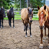 """<h2>Four Horses</h2> <br/>It was one of those long summer afternoons when you are sure it must be 5 PM, and you check the clock and it's only 2 PM!  You know these days.  Anyway, I decided to pick up my camera and walk around the ranch in Yellowstone for a little while  The stable area is always a target, rich environment, so I headed right over there to find these four horses lined up so nicely.<br/><br/>- Trey Ratcliff<br/><br/><a href=""""http://www.stuckincustoms.com/2011/04/02/four-horses/"""" rel=""""nofollow"""">Click here to read the rest of this post at the Stuck in Customs blog.</a>"""