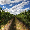 """<h2>The Wines of New Zealand</h2> <br/>I'm afraid I'm not much of a wine aficionado.  I will not deny that I am always envious of those that are (or, appear to be) quite knowledgeable about the subject matter.  Although I've been on about 10 different winery tours, I think I retain very little since I am not a wine drinker.<br/><br/>- Trey Ratcliff<br/><br/>Read the rest of this entry, including a discussion on why photographs were not allowed at Isabella's recent dance recital, at <a href=""""http://www.stuckincustoms.com/2010/06/20/new-zealand-wine/"""">the Stuck in Customs blog.</a>"""