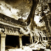 """<h2>Searching For Water</h2> <br/>The amazing Ta Prohm ruins of Cambodia have secrets around every turn.  These enigmatic trees grow up and over everything.  I was amazed by the girth and length of this lateral root system, as the trees search everywhere for water. <br/><br/> - Trey Ratcliff <br/><br/>Read the rest <a href=""""http://www.stuckincustoms.com/2010/09/24/searching-for-water/"""">here</a> at the Stuck in Customs blog."""