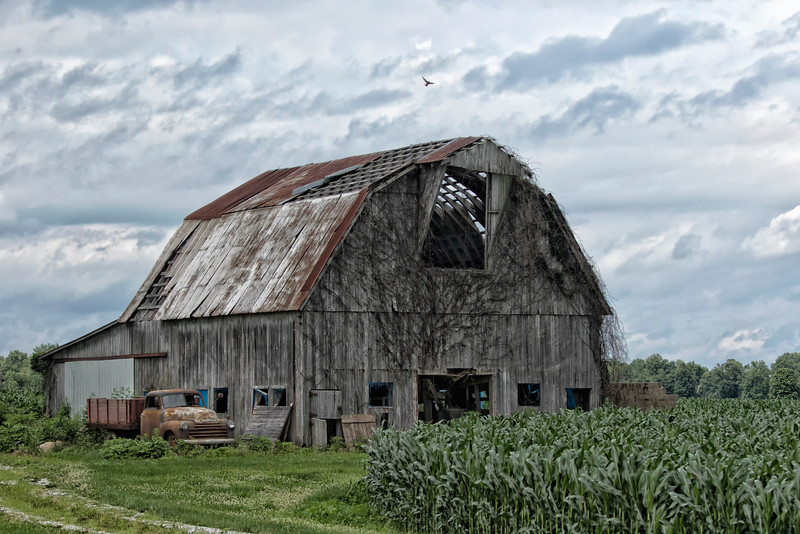 Barn in corn field in Indiana