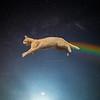 Cosmic Cat Capers
