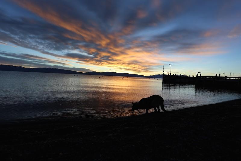 Jasmine, Tahoe sunrise