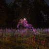 Sunset Bigfoot in Lupine Field
