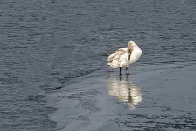 Walking on Water #4