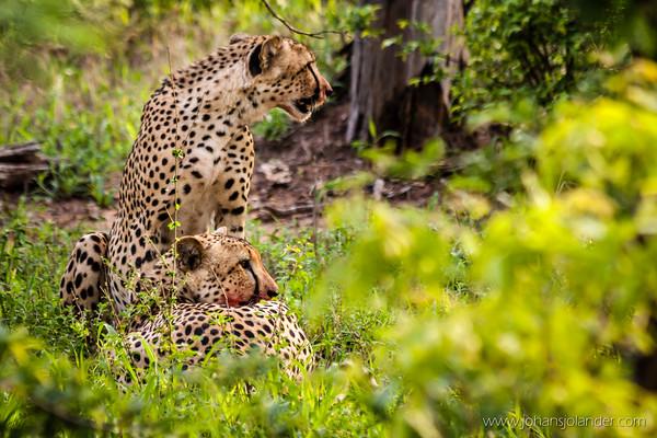 Klaserie Game Reserve, Greater Kruger Park
