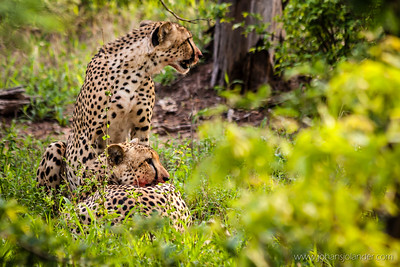 Klaserie Game Reserve, Greater Kruger Park