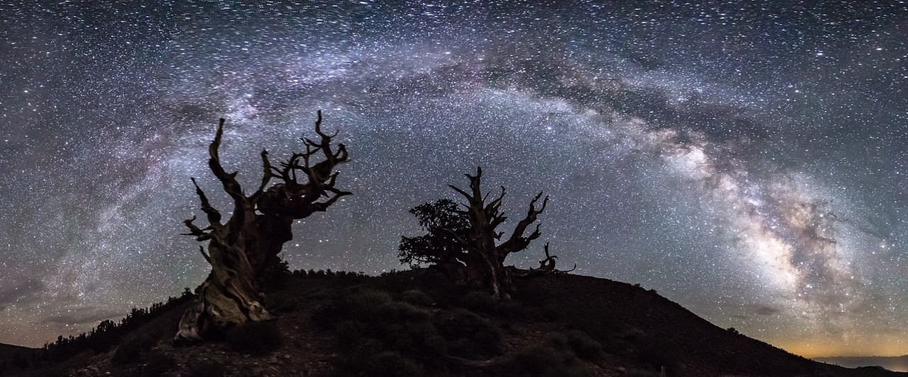 Milky Way Arch Over a Couple of Ancient Bristlecone Pine Trees
