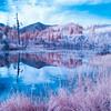 Beaver Pond Infrared III