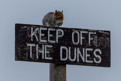 Keep Off The Dunes 1/14/17