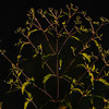 Backlit branches