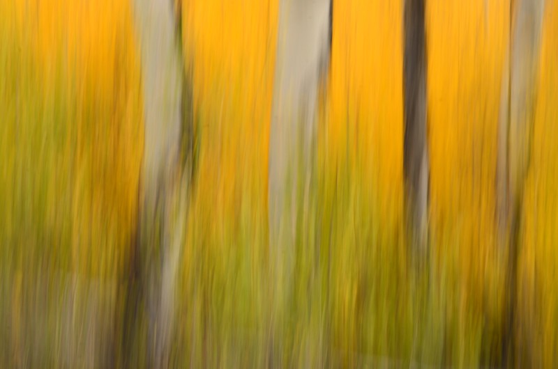 fall foliage abstract