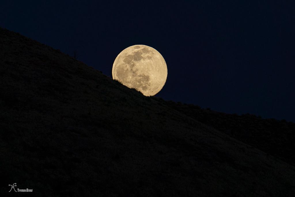 moon%20copy-XL.jpg