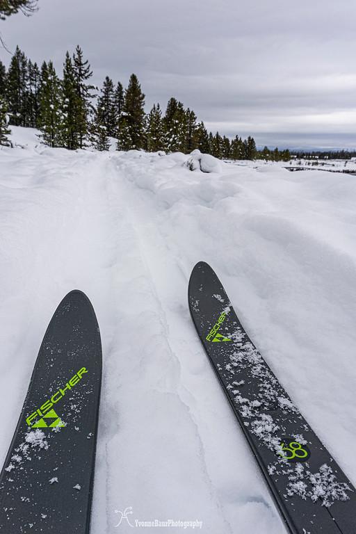ski%20copy-XL.jpg