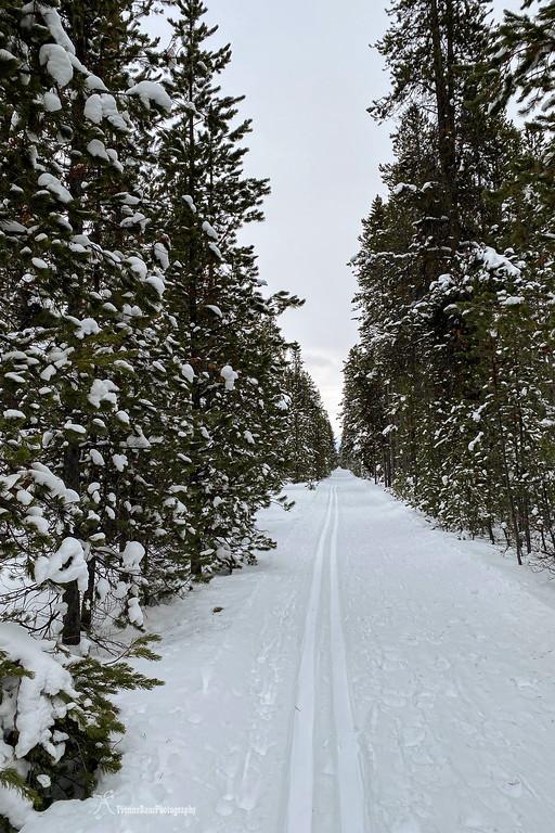 winter%20forest%20trail%20copy-XL.jpg