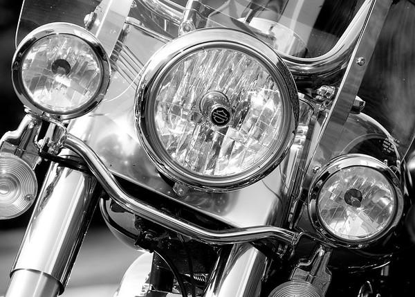 Harley. September 2010.