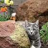 "My daughter's cat, Mandi, liked to follow me into the garden.  When I took this photo, I said, ""Mandi thinks she's a model.""  Mandi was a young cat then and is now a spoiled older cat living with my daughter and her husband.<br /> April 2006"