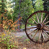 This wagon wheel is at the Pinecrest Ranger Station in Pinecrest, California.  The photo was taken in December of 2005.  I was happy to still see some fall color that added interest to the photo.