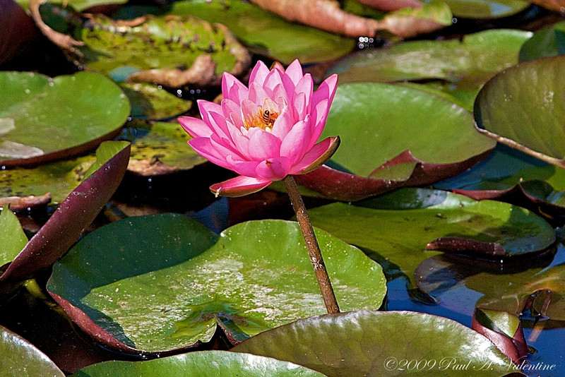 Clark Gardens 07-02-09