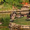 Clark Gardens 08-25-09