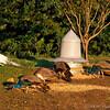 Clark Gardens 10-20-09
