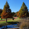 Clark Gardens 11-07-09