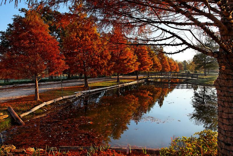 Clark Gardens 11-10-09