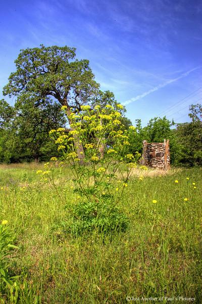 Mangham Field